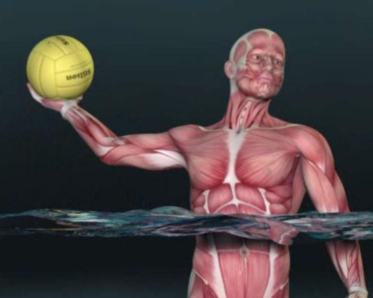 patologie della spalla nello sport
